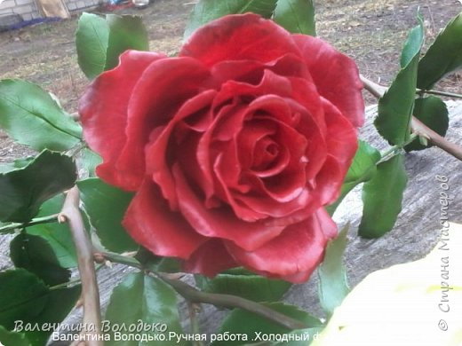 Добрый день мастера и мастерицы!!!!Слепила темно бордовые розы и с фотографировала с нежно лимонными,мне очень понравился контраст,нежность и страсть. фото 9