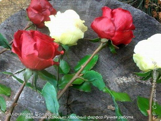 Добрый день мастера и мастерицы!!!!Слепила темно бордовые розы и с фотографировала с нежно лимонными,мне очень понравился контраст,нежность и страсть. фото 3