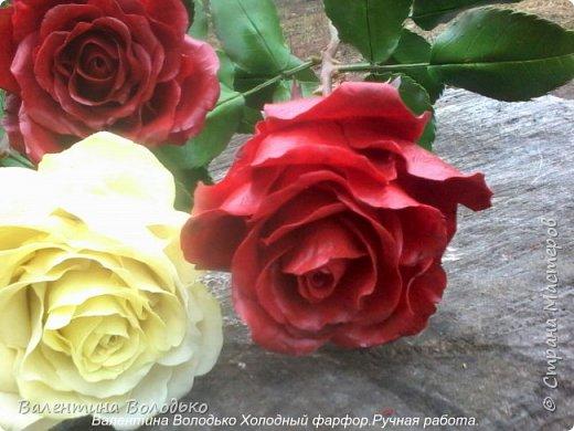 Добрый день мастера и мастерицы!!!!Слепила темно бордовые розы и с фотографировала с нежно лимонными,мне очень понравился контраст,нежность и страсть. фото 5