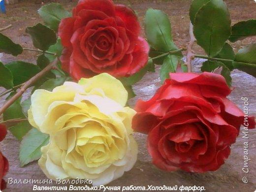 Добрый день мастера и мастерицы!!!!Слепила темно бордовые розы и с фотографировала с нежно лимонными,мне очень понравился контраст,нежность и страсть. фото 4