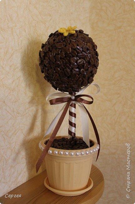Кофейное деревце - украшаю кухню:-)