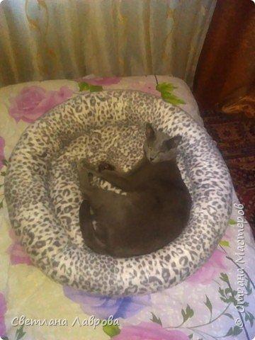 Здравствуйте мастера и мастерицы! Своему любимому котейке сшила лежанку. фото 2