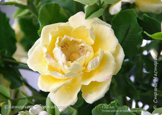 Букет из желтых роз и снежной ягоды фото 7