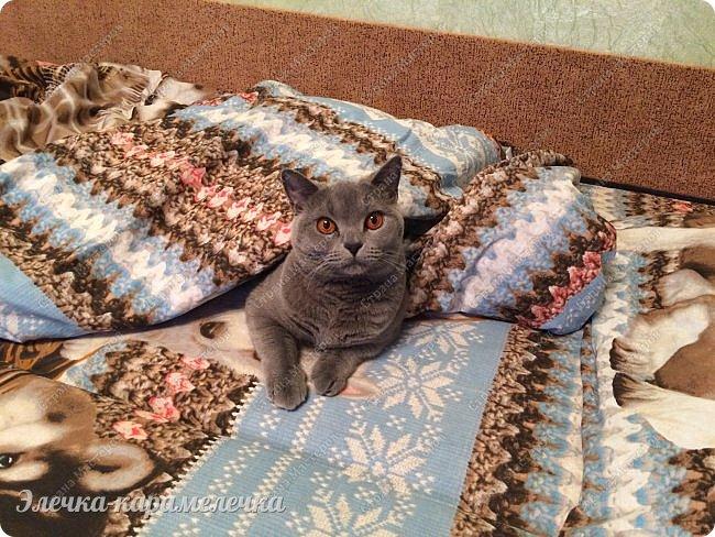Добрый день, мои друзья и гости моего блога!  по многочисленным просьбам, сделала фоторепортаж нашей любимки--принцессы по имени Дымка))), почему принцесска, потому как ведет она соответственно)), капризная и немного вредная, но ей все прощается, ввиду любви к ней)))!  Теперь я вам расскажу о себе САМА))) фото 43