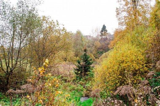 Осень. Просто фото. фото 3
