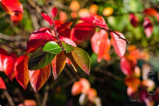 Осень. Просто фото. фото 8