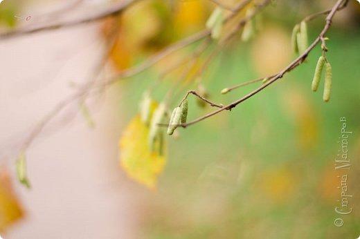 Осень. Просто фото. фото 7
