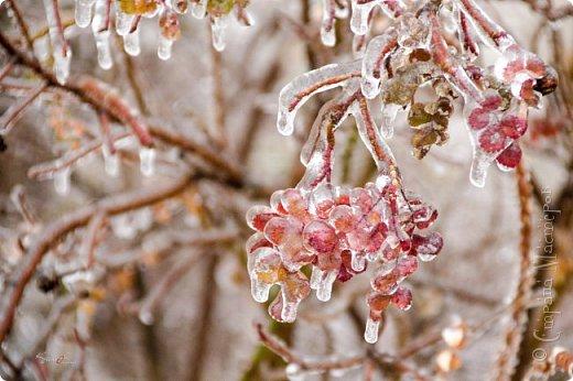 Однажды утром вся природа оказалась скована льдом фото 1