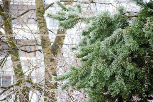 Однажды утром вся природа оказалась скована льдом фото 2