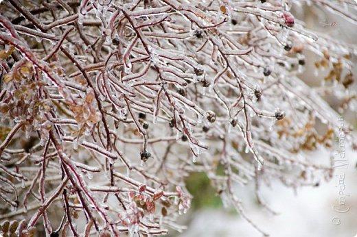 Однажды утром вся природа оказалась скована льдом фото 3