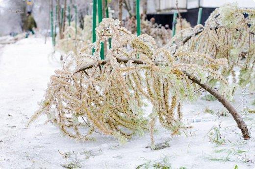 Однажды утром вся природа оказалась скована льдом фото 5