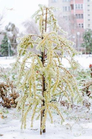 Однажды утром вся природа оказалась скована льдом фото 4
