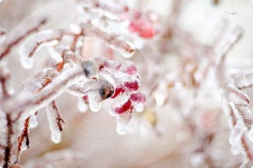 Однажды утром вся природа оказалась скована льдом фото 8