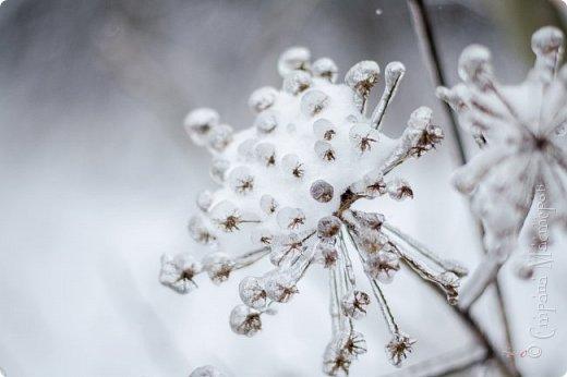 Однажды утром вся природа оказалась скована льдом фото 9