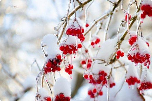 Однажды утром вся природа оказалась скована льдом фото 10