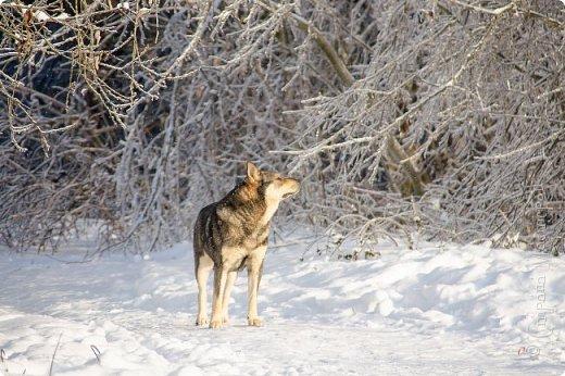 Зима фото 10