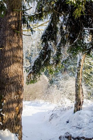Зима фото 11