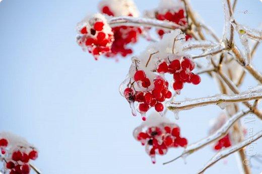 Зима фото 13