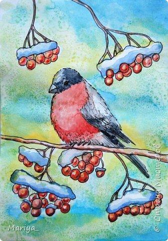 Рисуем открытку на Новый год и Рождество акварелью, линером и солью. Зима, снегирь на рябине. Видео мастер-класс. фото 2
