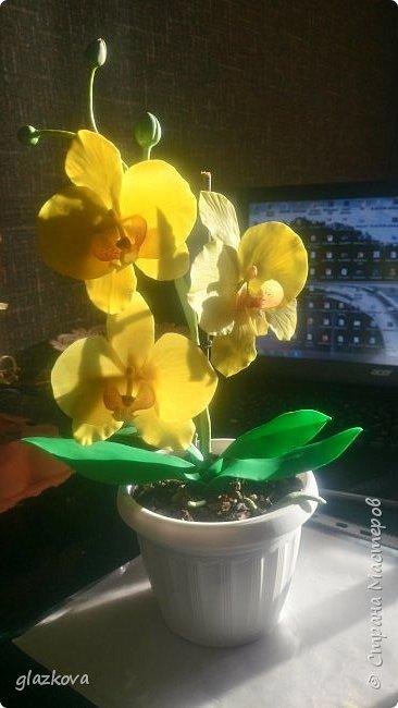 Моя первая орхидея. Подскажите как так,что бы проволоки не видно в лепестках было? фото 4