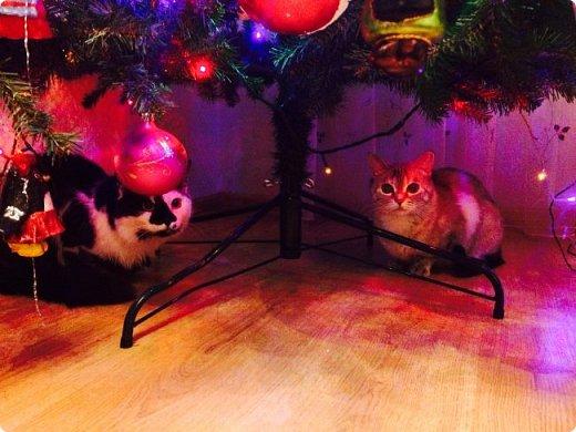 Всем привет!!!! Знакомьтесь, мои кошки. Тося, Степа, Вася, Тиша. фото 16
