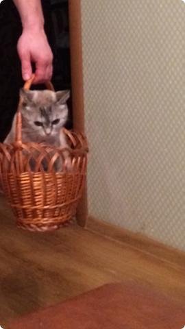 Всем привет!!!! Знакомьтесь, мои кошки. Тося, Степа, Вася, Тиша. фото 18