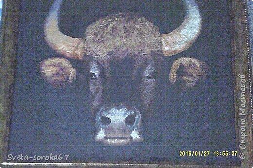 буйвол фото 1