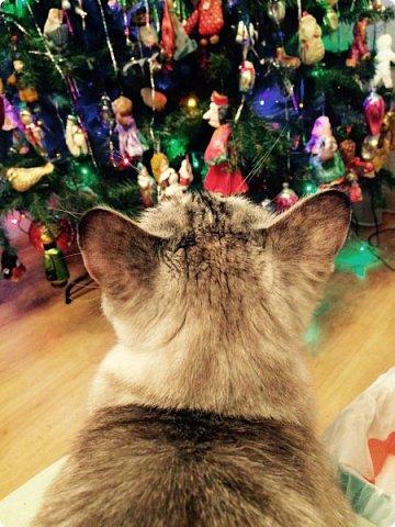 Всем привет!!!! Знакомьтесь, мои кошки. Тося, Степа, Вася, Тиша. фото 37