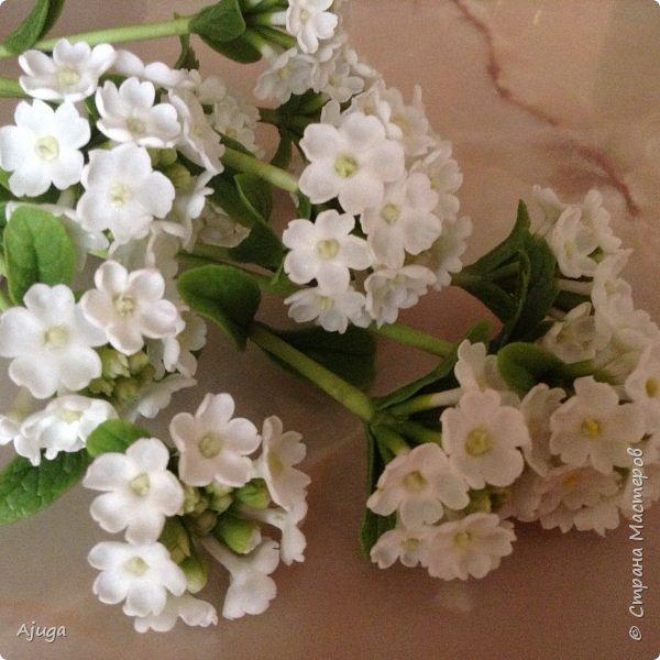 """Вербена- ,,священная ветвь"""" в переводе с латинского. По поверьям этот цветок обладает способностью защищать от болезней, изгонять злых духов, пробуждать интуицию... фото 2"""
