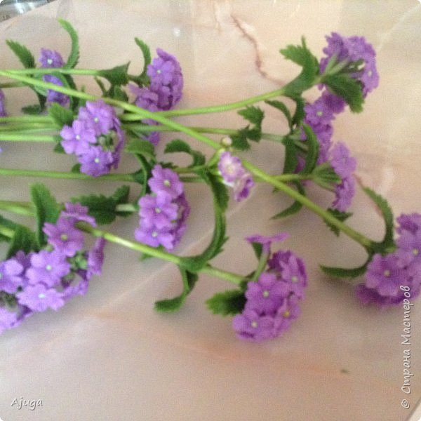 """Вербена- ,,священная ветвь"""" в переводе с латинского. По поверьям этот цветок обладает способностью защищать от болезней, изгонять злых духов, пробуждать интуицию... фото 3"""