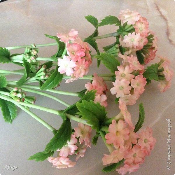 """Вербена- ,,священная ветвь"""" в переводе с латинского. По поверьям этот цветок обладает способностью защищать от болезней, изгонять злых духов, пробуждать интуицию... фото 4"""