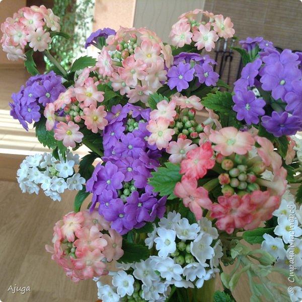 """Вербена- ,,священная ветвь"""" в переводе с латинского. По поверьям этот цветок обладает способностью защищать от болезней, изгонять злых духов, пробуждать интуицию... фото 7"""