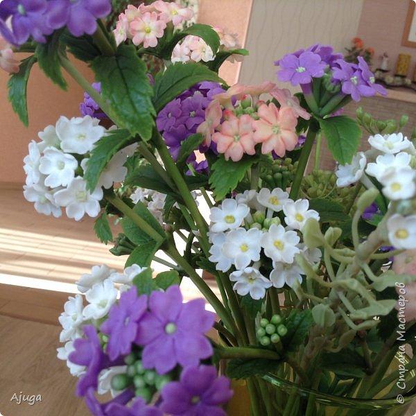 """Вербена- ,,священная ветвь"""" в переводе с латинского. По поверьям этот цветок обладает способностью защищать от болезней, изгонять злых духов, пробуждать интуицию... фото 8"""