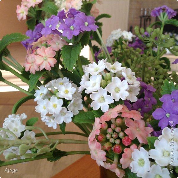 """Вербена- ,,священная ветвь"""" в переводе с латинского. По поверьям этот цветок обладает способностью защищать от болезней, изгонять злых духов, пробуждать интуицию... фото 9"""