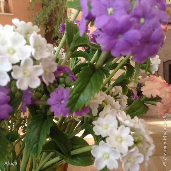 """Вербена- ,,священная ветвь"""" в переводе с латинского. По поверьям этот цветок обладает способностью защищать от болезней, изгонять злых духов, пробуждать интуицию... фото 10"""