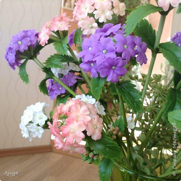 """Вербена- ,,священная ветвь"""" в переводе с латинского. По поверьям этот цветок обладает способностью защищать от болезней, изгонять злых духов, пробуждать интуицию... фото 11"""