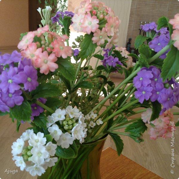 """Вербена- ,,священная ветвь"""" в переводе с латинского. По поверьям этот цветок обладает способностью защищать от болезней, изгонять злых духов, пробуждать интуицию... фото 12"""