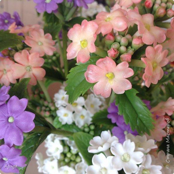 """Вербена- ,,священная ветвь"""" в переводе с латинского. По поверьям этот цветок обладает способностью защищать от болезней, изгонять злых духов, пробуждать интуицию... фото 13"""