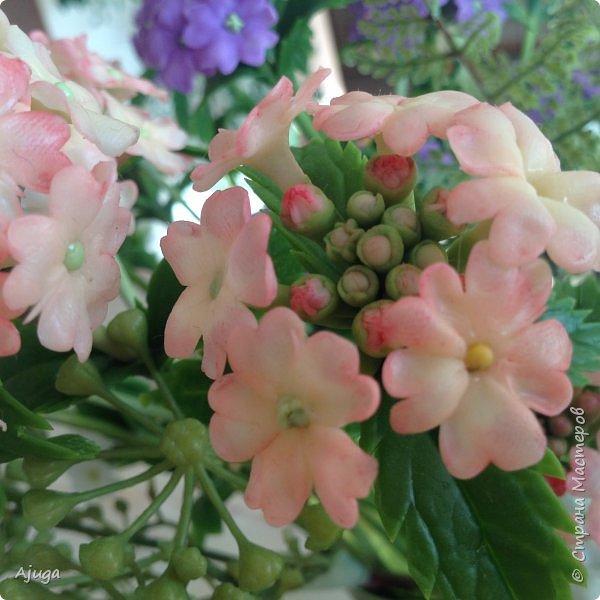 """Вербена- ,,священная ветвь"""" в переводе с латинского. По поверьям этот цветок обладает способностью защищать от болезней, изгонять злых духов, пробуждать интуицию... фото 16"""