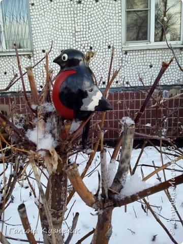Наконец-то я его сделала. Люблю смотреть на этих птиц, они необыкновенно красивые, яркие. Но появляются у нас только зимой. Как их делать когда-то очень давно мене показала моя коллега-наставница, сейчас она на заслуженном отдыхе. Посвящается Тремасовой Валентине Михайловне, замечательному воспитателю и человеку. Спасибо! Теперь и я решила поделиться с вами. фото 1