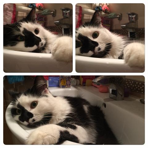 Всем привет!!!! Знакомьтесь, мои кошки. Тося, Степа, Вася, Тиша. фото 38