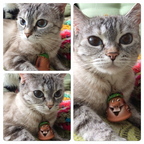 Всем привет!!!! Знакомьтесь, мои кошки. Тося, Степа, Вася, Тиша. фото 39