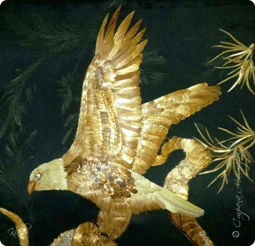 Считается, что белоголовый орлан символизирует силу, мужество, свободу и бессмертие фото 2