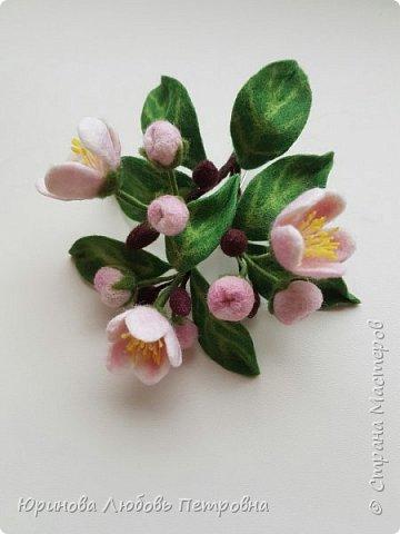 Веточка яблони в цвету.  фото 5