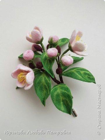 Веточка яблони в цвету.  фото 4