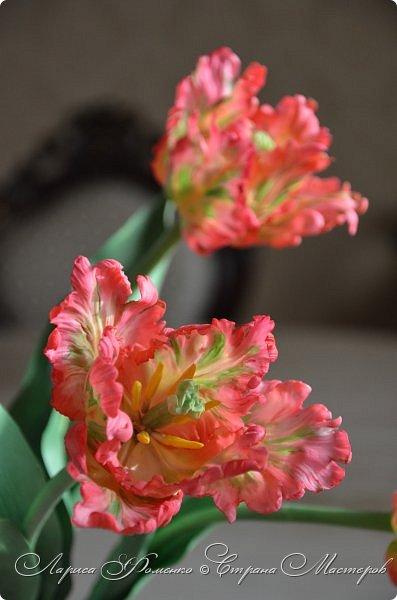 Попугайные тюльпаны.