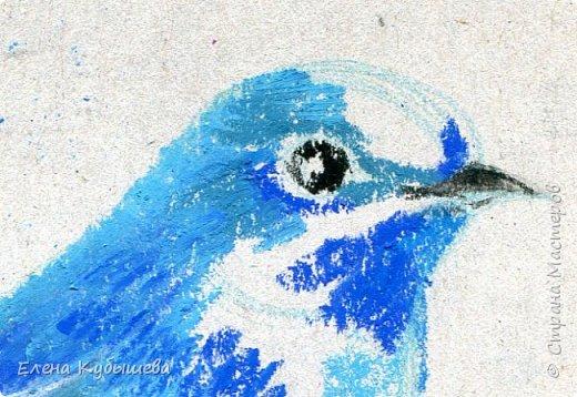 """Друзья, сейчас я увлеченно рисую пастелью, готовлю МК для вас на курсе <a href=""""http://stranamasterov.ru/workshop16"""">Сам себе художник</a> и хочу поделиться одним из заданий. Это Синяя Птица Удачи!   Мы желаем друг другу удачи по разным поводам. На праздники и в повседневной жизни, напутствуя кого-то в дорогу, на работу, экзамен, просто в любых начинаниях!  Размышляя о символах наших пожеланий, я всегда представляю яркую синюю птичку. Предлагаю вам изобразить свою птицу удачи в технике пастели.  фото 10"""