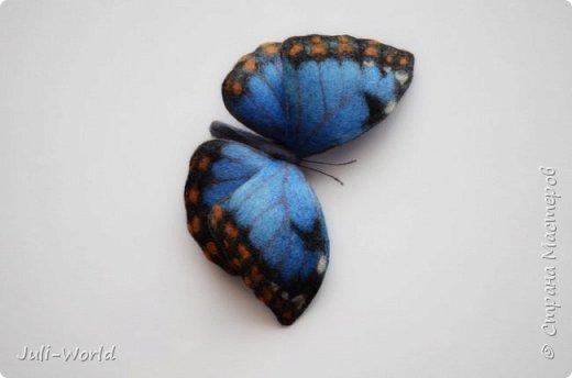 Стрелиция, бабочка, тигровая лилия, такка. фото 6