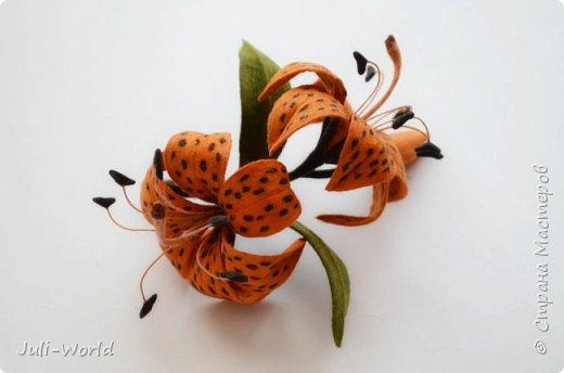 Стрелиция, бабочка, тигровая лилия, такка. фото 12
