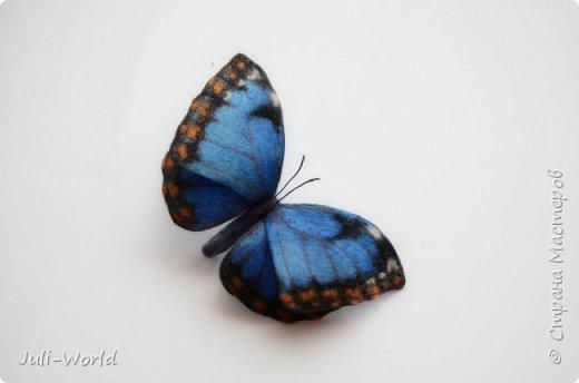 Стрелиция, бабочка, тигровая лилия, такка. фото 8